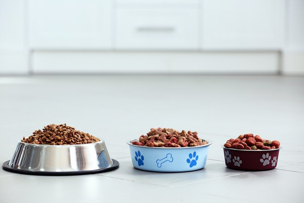 Dog food in different types of bowls