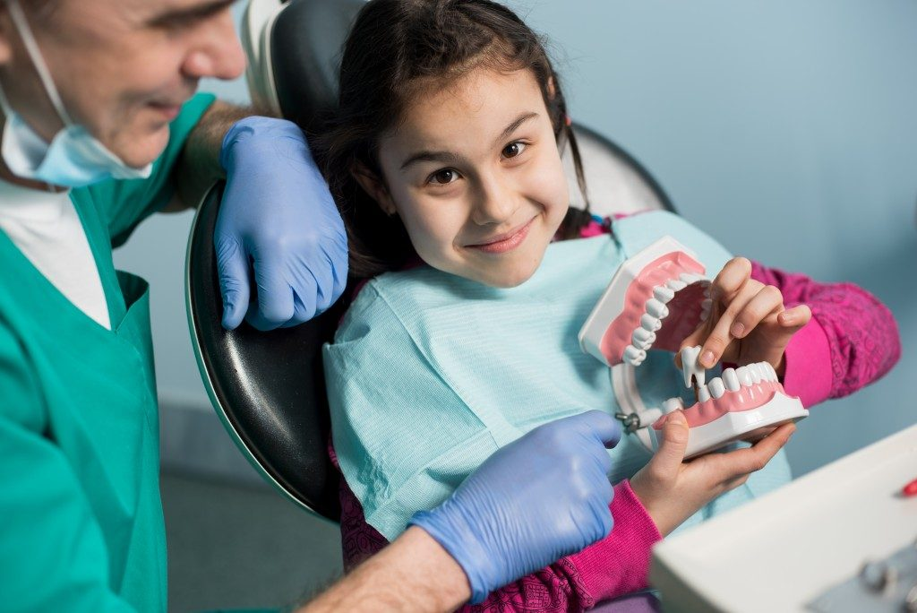 little girl looking at a dental model