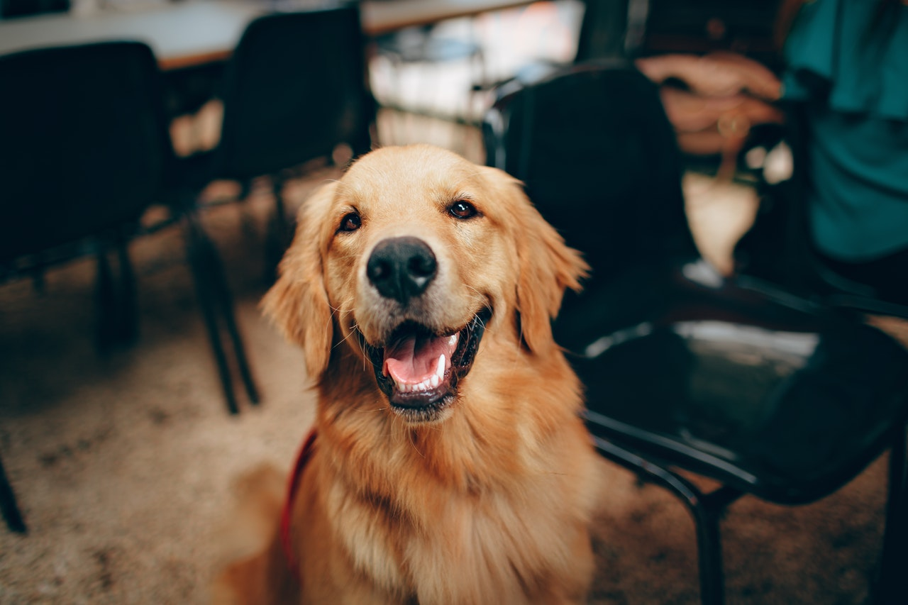 Pet Ownership and Its Significant Impact in Promoting Improved Health and Well-being